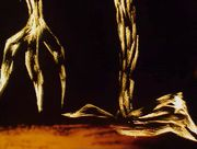 Корзина с еловыми шишками