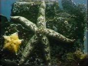 Подводные друзья