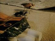 Весенняя муха